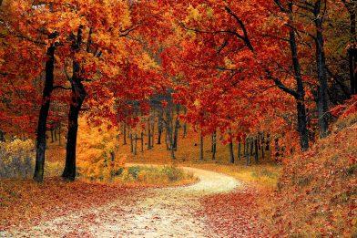 Equinócio de Outono: Tudo o que você precisa saber!