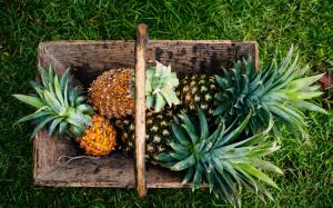 fruta-abacaxi