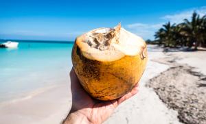 fruta-coco