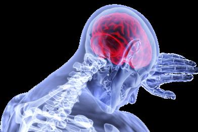 Homúnculo cortical: O que é, Como é visto?