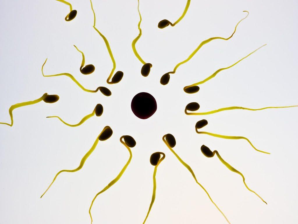 período fértil 4
