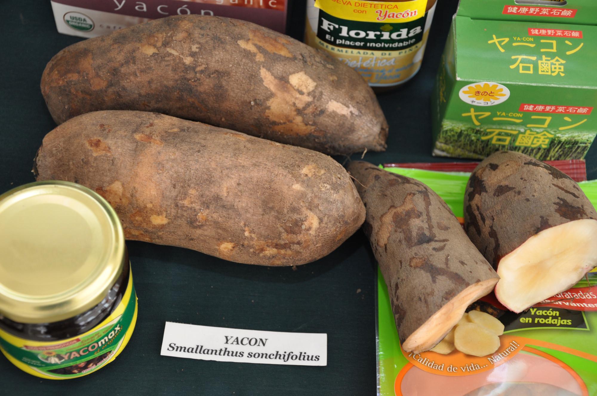Batata yacon 2